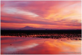 Winter - Mt. Diablo Delta Sunset